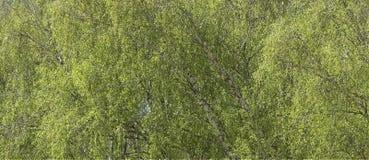 Background of foliage stock photography