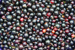 Background food - Black currant Royalty Free Stock Image