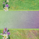 Background For Congratulations Card Stock Images