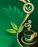 Background For Design - Green Tea Royalty Free Stock Photography