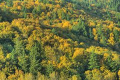 Background Forest Fall Autumn Royalty Free Stock Photography
