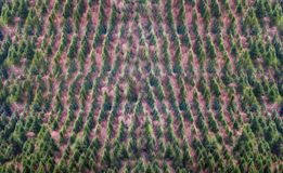 Background of forest with trees pattern stock photos