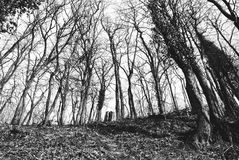 BACKGROUND: In the forest/wood; B&W Stock Photography