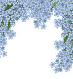 Background of forget-me-not Stock Photography