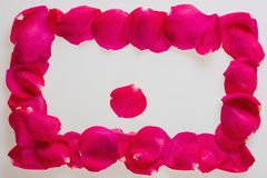 Background in the form of a frame from petals of magnificent pink roses. Background in the form of a frame from petals of magnificent pink fresh roses stock photo