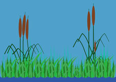 The background in the form of reeds and the river Stock Photo