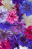 Background formed by cornflowers Stock Photography