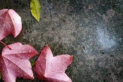Background foto autumn, rain. Poland. Background foto of the autumn, rain. Poland, Europe stock images