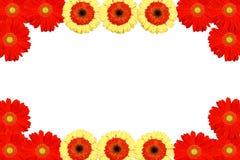Background frame flower Royalty Free Stock Image