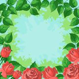 Background, frame from flowers. Floral background, frame from flowers red roses and green leaves Royalty Free Stock Photos