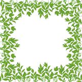 Background, frame of green leaves. Isolated on white background. Vector Royalty Free Illustration