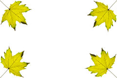 Background frame of isolated yellow autumn leafs on the corners Stock Photography