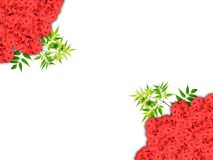 A Background frame with red flowers and green leaves and white background Stock Images