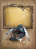 Background with frame and two pigeons Royalty Free Stock Images