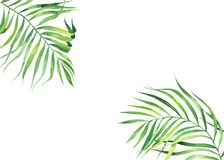 Background frame in watercolor style. Exotic coconut leaves. Natural print. Bright green tropical frame for greeting cards, web de vector illustration