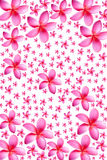 Background of frangipani flower Stock Image