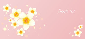 Background with frangipani flowers Royalty Free Stock Images