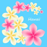 Background with frangipani flowers. Vector illustration. Stock Photography