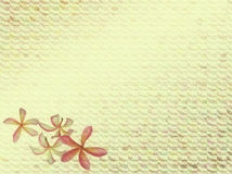 Background with Frangipani or plumeria tropical fl vector illustration