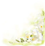 Background with Freesia Stock Photo