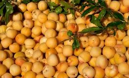 Fresh apricots Stock Photography