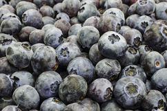 Background of fresh blueberries Stock Images
