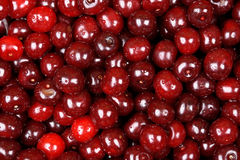 Background Of Fresh Cherries With Water Drops Royalty Free Stock Image