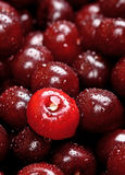 Background Of Fresh Cherries With Water Drops Stock Image