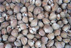 A background of fresh cockles for sale at a market. A background of fresh cockles Royalty Free Stock Image