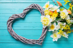 Background with fresh daffodils  and decorative heart Royalty Free Stock Image