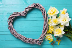 Background with fresh daffodils  and decorative heart Stock Photos