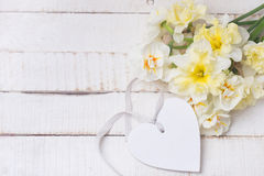 Background with fresh daffodils and heart Royalty Free Stock Image