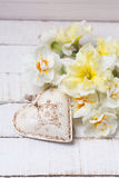 Background with fresh daffodils and heart Stock Images