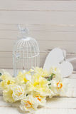 Background with fresh daffodils Royalty Free Stock Photo