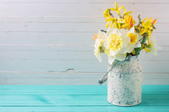 Background with fresh daffodils Royalty Free Stock Photography