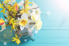 Background with fresh daffodils Stock Photo