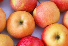 Background with fresh delicious juicy red apples. Stock Image