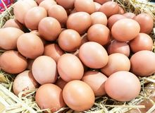 Background of fresh eggs Stock Images