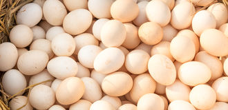 Background of fresh eggs Royalty Free Stock Images