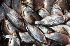 Background with fresh fishes Stock Images