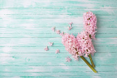 Background with fresh flowers hyacinths stock photos