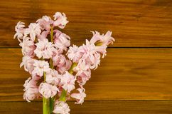 Background with fresh flowers hyacinths and wooden planks. Place Stock Photo