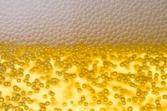 Background from fresh foamy beer. Background from fresh foamy beer with bubbles. Close-up Stock Image