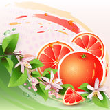 Background with fresh grapefruit Royalty Free Stock Photo