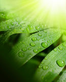 Background fresh and green Royalty Free Stock Photography