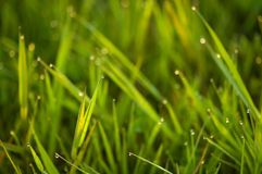 Grass Background stock photography