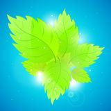 Background with fresh green leaves. Royalty Free Stock Photos