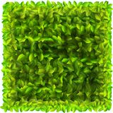 Background with fresh green leaves Royalty Free Stock Image