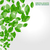 Background with fresh green leaves. EPS10 stock illustration
