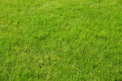Background of fresh green spring grass Royalty Free Stock Photography